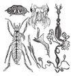 Coleopteres or French-Language Scientific Journal of Entomology