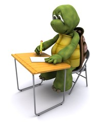 tortoise sat at school desk