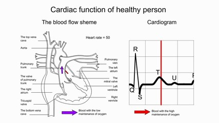 Cardiac function of healthy person