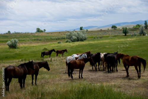 life on a montana ranch