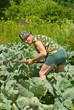 Gardener with hoe 2