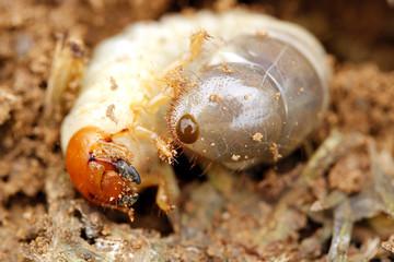 Worm in soil