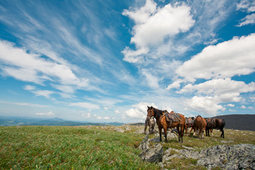 harnessed horses against mountains