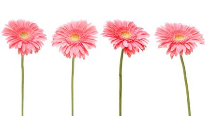 4 daisy