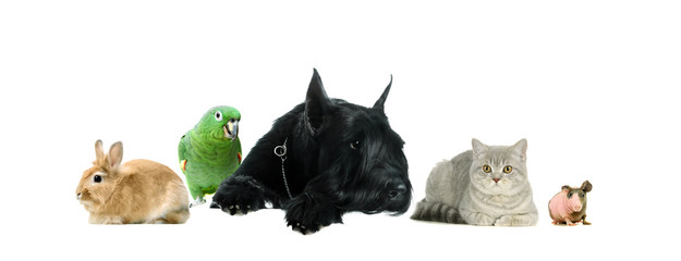 Group of pets together on the white background