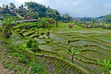 agriculture indonésie
