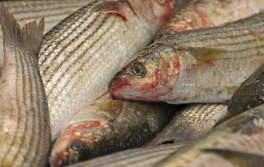 Fish on the Slab