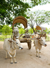 Cow and cart
