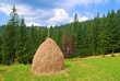 haystack on a pasture