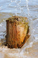 Old log at sea coast.