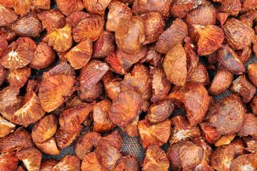 Dried Betel Nut or Areca Nut