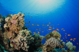 Underwater Coral Reef in Sunlight poster