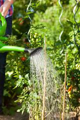 Gardening in summer - woman watering plants