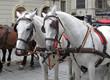 Pferde  Pferdekutsche