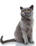 Fototapeta niebieski - szary - Zwierzę domowe