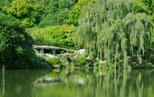 lake greenery
