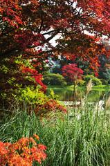 colourful greenery