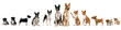 Group of basenji dog and puppies