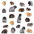 Group of different breeds of rabbits