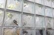 Glasbausteinwand Frostschaden