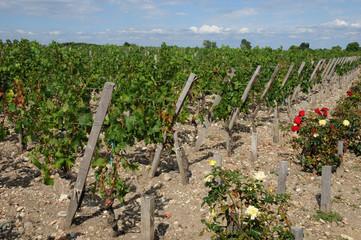 France, vignoble dans le Médoc