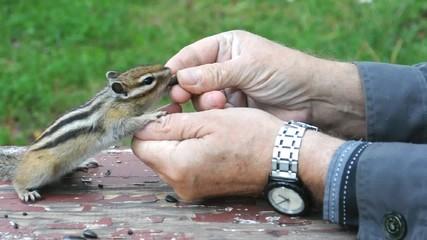 Бурундук (chipmunk) требует угощения
