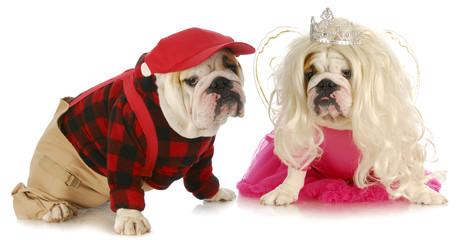 male and female dog