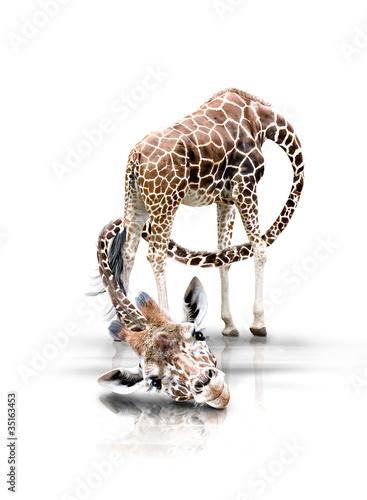 Fotobehang Giraffe Giraffe mit langen Hals