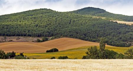 Campos de Navarra 3