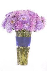 aster in the vase