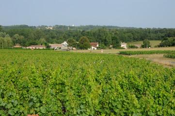 France, vignoble dans le Sauternais