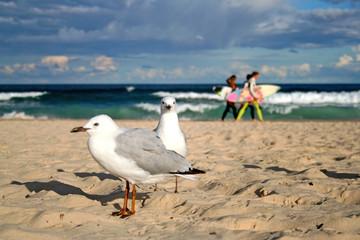 Möwen am Bondi Beach