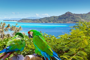 Bright parrot against the sea and mountains