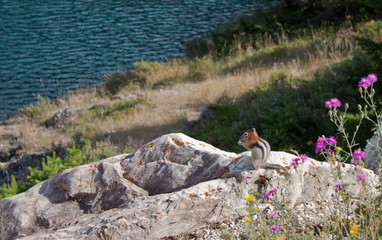 squirrel eating with a view