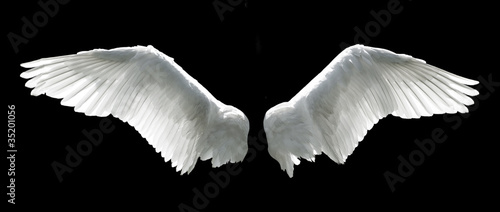 In de dag Vogel Angel wings isolated on the black background