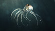 deep sea octopod