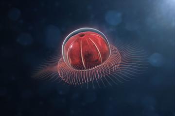 deep sea Anthomedusae