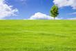 Leinwanddruck Bild - 草原と青空と木