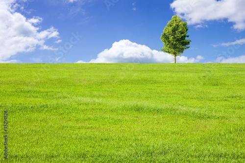 Leinwanddruck Bild 草原と青空と木