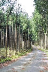 杉林の林道