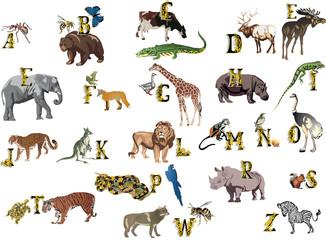 color animals alphabet