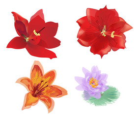 collection of lily family flowers isolated on white