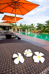 Frangipani flowers and swimming pool