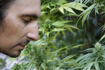 Drogenfahnder Marihuana