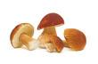 mushrooms close-up - 35237249