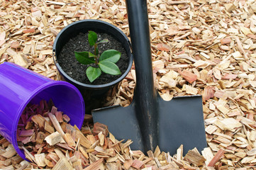 mulch and black shovel with potted plant