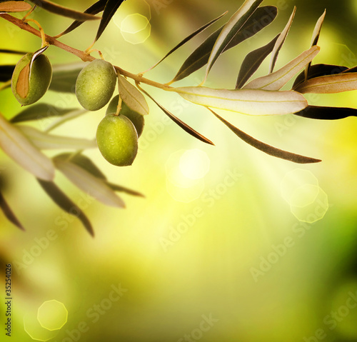Tuinposter Olijfboom Olive border design.Food background