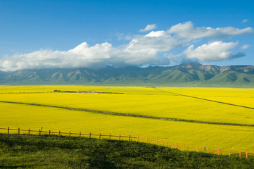 Scenery of Tibetan plateau