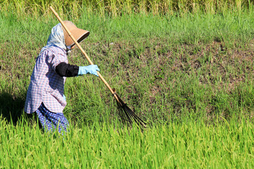 Agricultural work in Asia