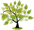 Baum, Blätter, Bio